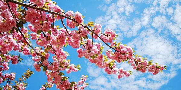 spring-time-e1364242985563